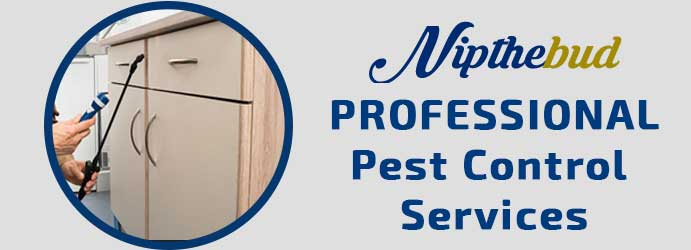 Expert Pest Control Services in Brisbane