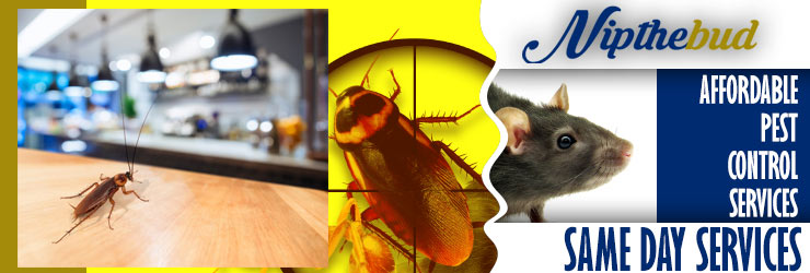 Affordable Pest Control Adelaide
