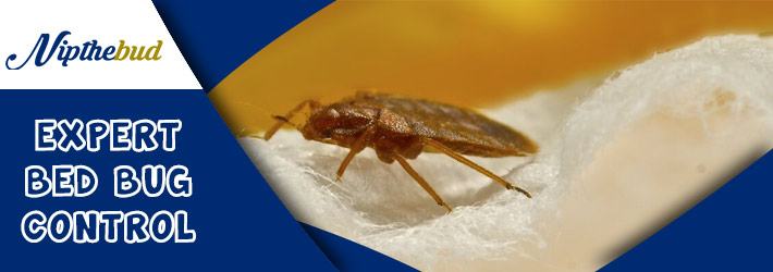 Expert Bed Bug Control