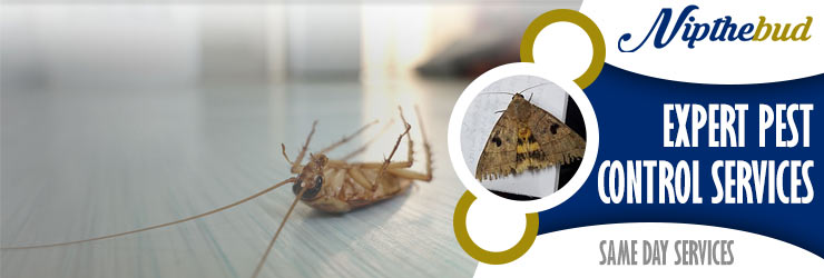 Expert Pest Control Kingston